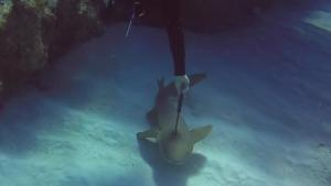 Shark Relieved Of Bad Headache