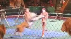 Lion Attacks Trainer In Circus Show