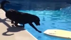 Clever Dog Hates Water