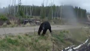 Black Bear Attack