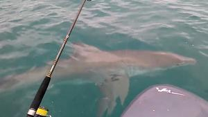 Great White Shark Rocks Small Boat