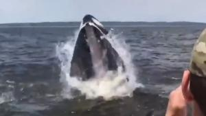 Humpback Whale Rocks The Boat