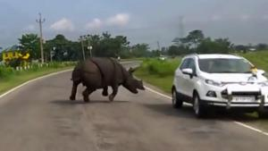 Rhino Charging Cars On Road