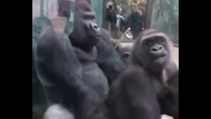 Horny Gorilla Shows How It's Done