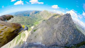 Eagle Eye View On The Alps