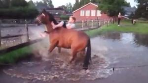Horse Ride In Water Ends Wet