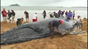 Rescuing Beached Whale