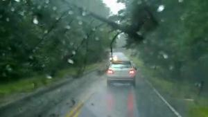 Tree Almost Lands On Car