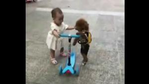 Poodle Stealing  Kids Scooter