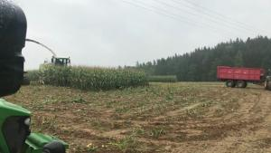 Corn Harvest With Surprise