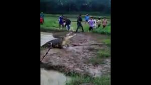 Catching A Huge Crocodile